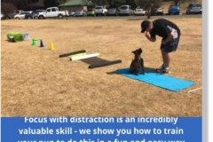 Edenvale-puppy-school-pic-3