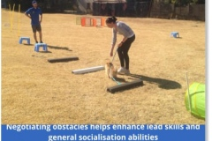 Edenvale-puppy-school-pic-4