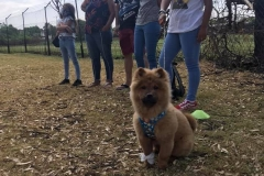 Edenvale-puppy-school-pic-6